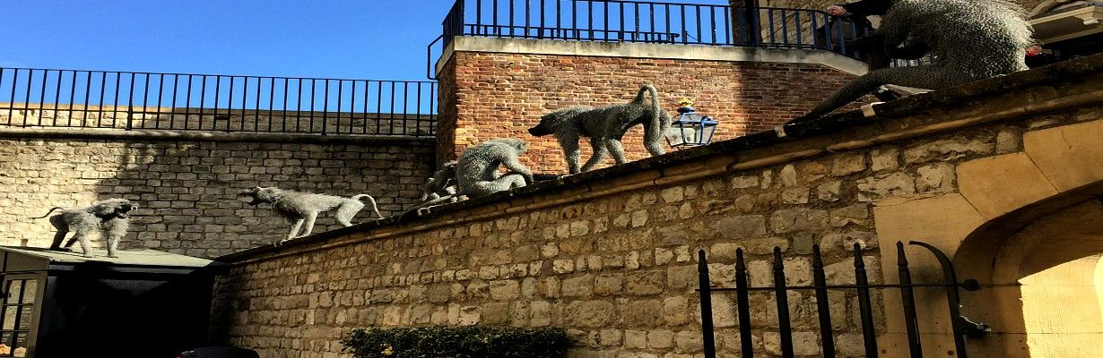 Baboons at Tower of London